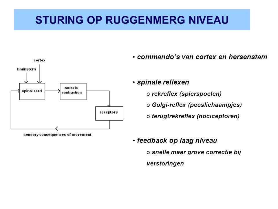 STURING OP RUGGENMERG NIVEAU