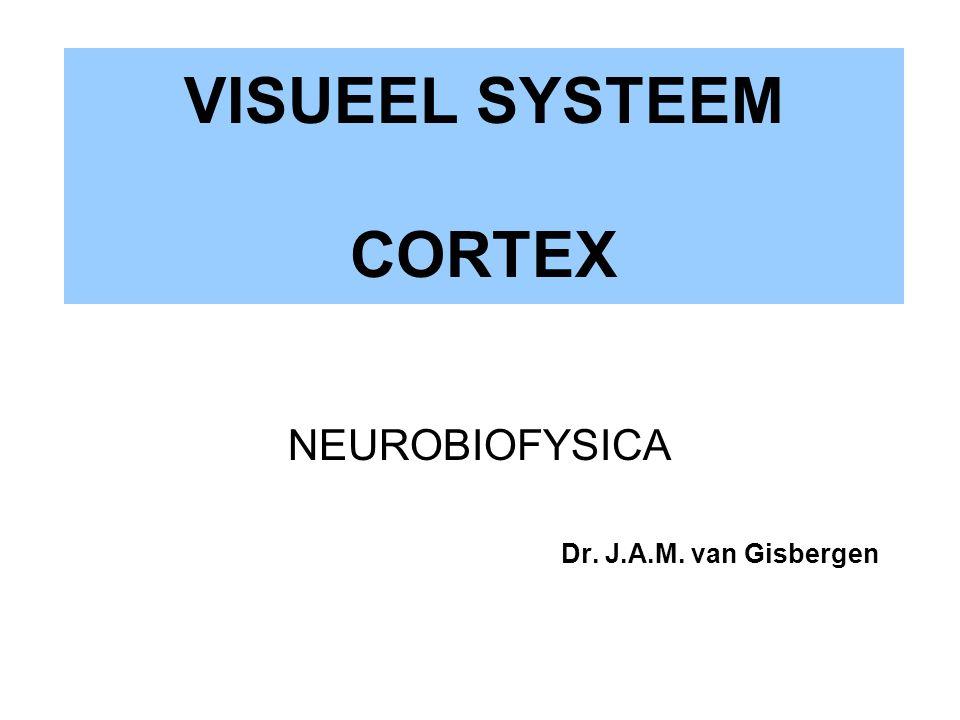 VISUEEL SYSTEEM CORTEX