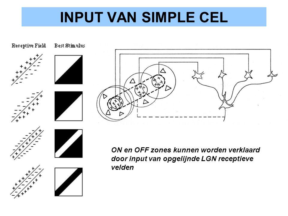 INPUT VAN SIMPLE CEL ON en OFF zones kunnen worden verklaard door input van opgelijnde LGN receptieve velden.