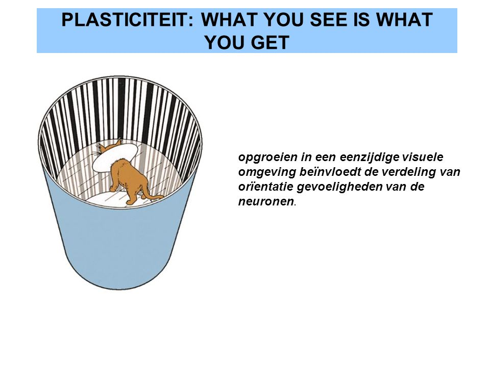 PLASTICITEIT: WHAT YOU SEE IS WHAT YOU GET
