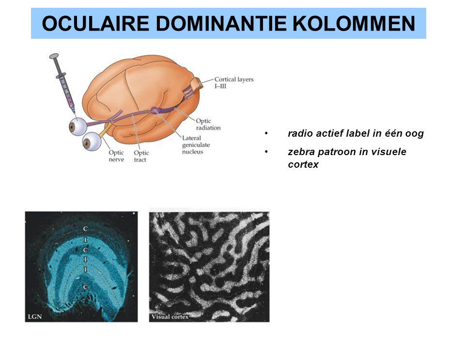 OCULAIRE DOMINANTIE KOLOMMEN