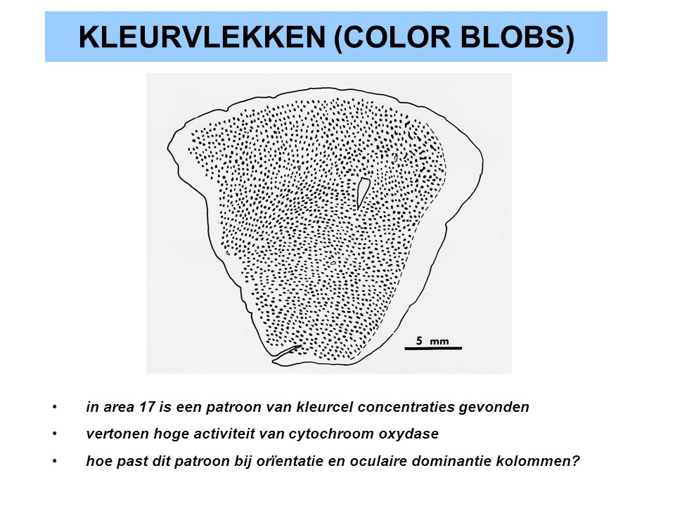 KLEURVLEKKEN (COLOR BLOBS)