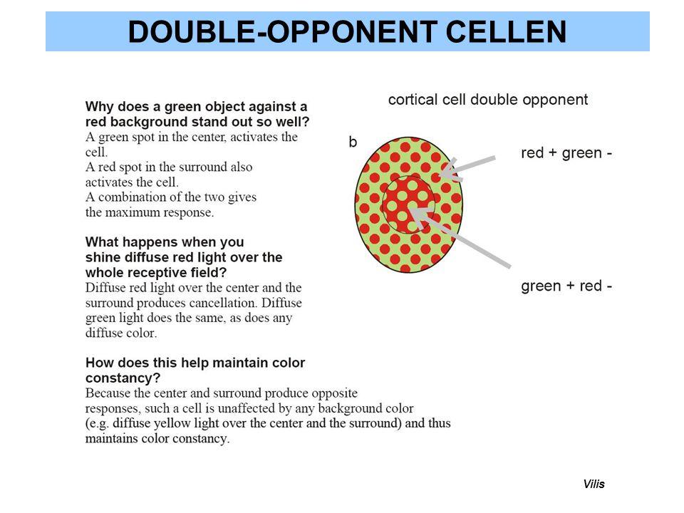 DOUBLE-OPPONENT CELLEN
