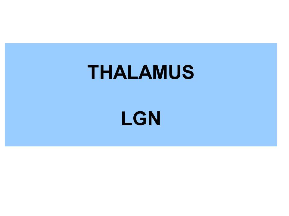 THALAMUS LGN