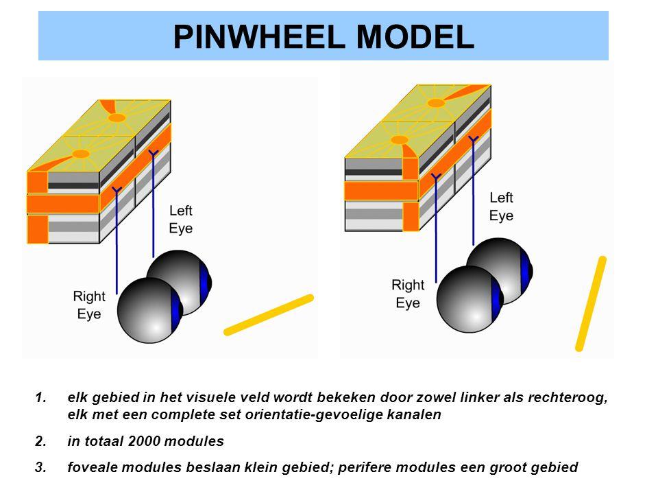 PINWHEEL MODEL elk gebied in het visuele veld wordt bekeken door zowel linker als rechteroog, elk met een complete set orientatie-gevoelige kanalen.