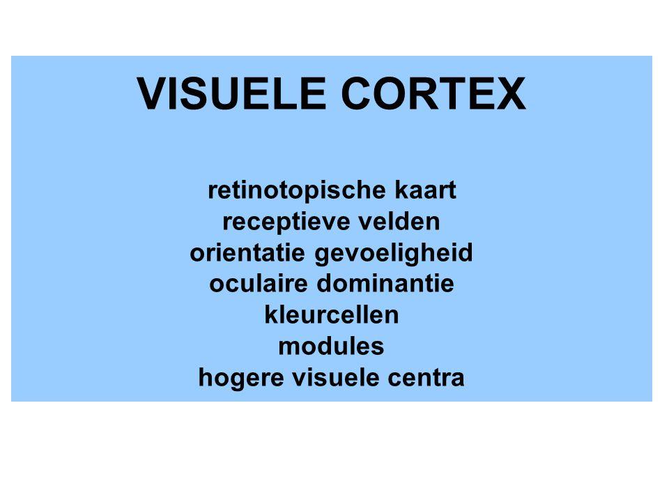 VISUELE CORTEX retinotopische kaart receptieve velden orientatie gevoeligheid oculaire dominantie kleurcellen modules hogere visuele centra
