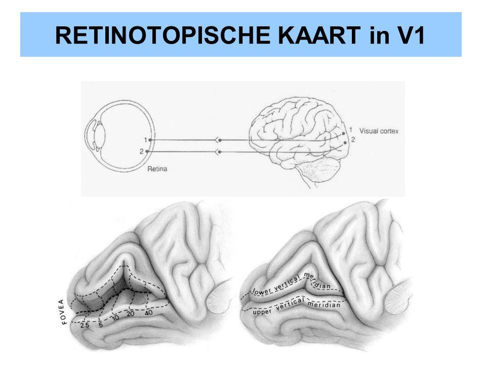 RETINOTOPISCHE KAART in V1