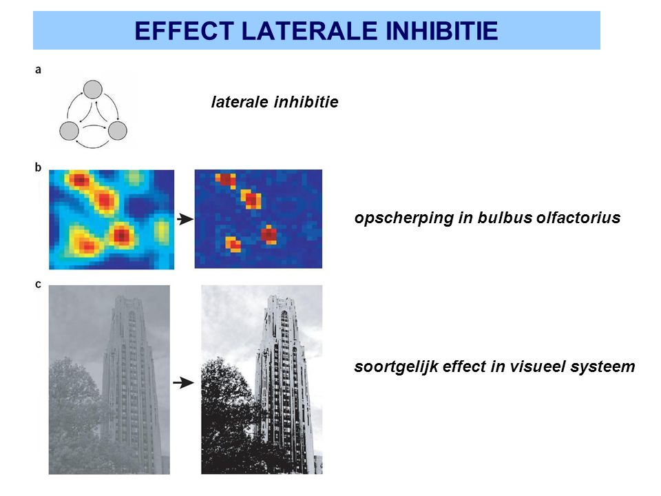 EFFECT LATERALE INHIBITIE
