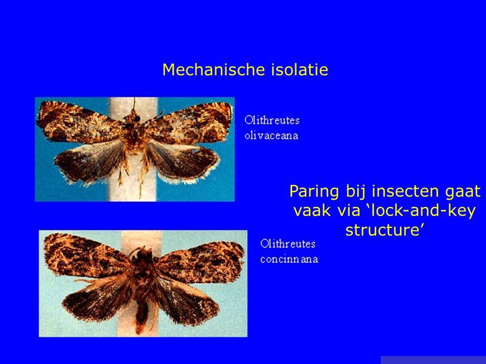 Paring bij insecten gaat vaak via 'lock-and-key structure'