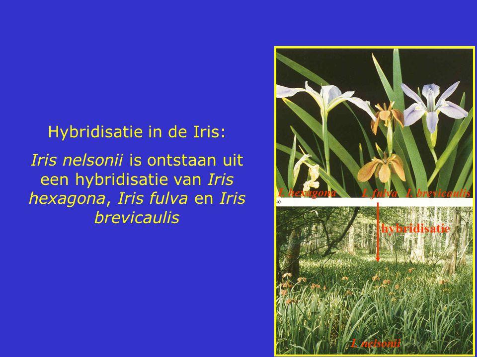 Hybridisatie in de Iris: