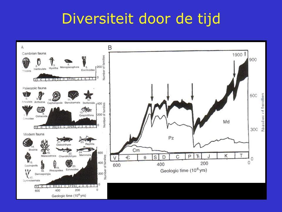 Diversiteit door de tijd