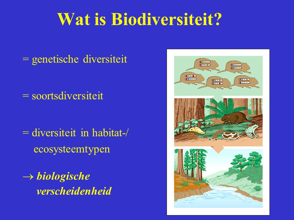 Wat is Biodiversiteit = genetische diversiteit = soortsdiversiteit