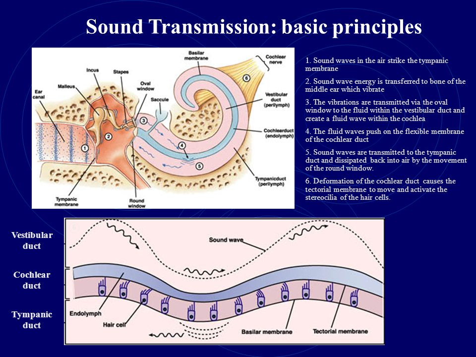 Sound Transmission: basic principles
