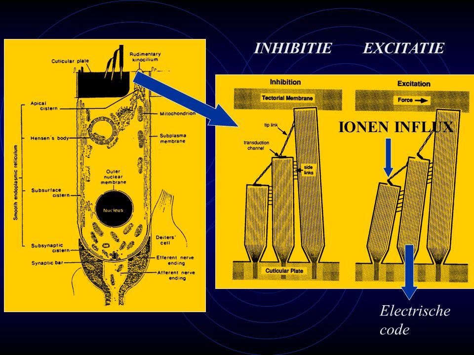 INHIBITIE EXCITATIE IONEN INFLUX Electrische code