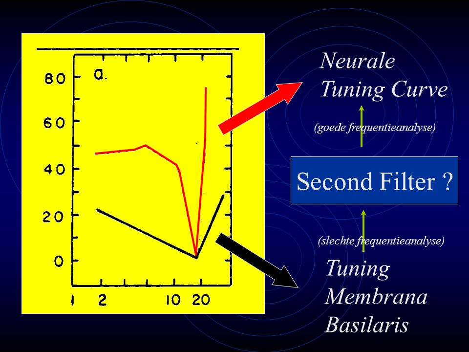 Second Filter Neurale Tuning Curve Tuning Membrana Basilaris