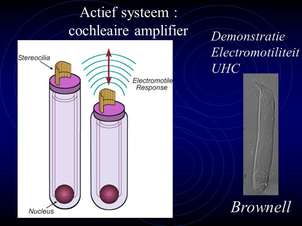 Actief systeem : cochleaire amplifier