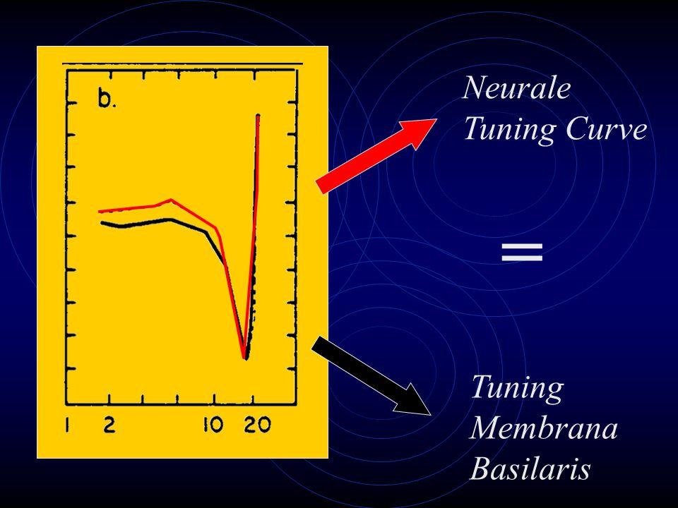 Neurale Tuning Curve = Tuning Membrana Basilaris