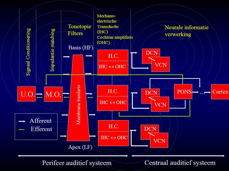 ... U.O. M.O. Perifeer auditief systeem Centraal auditief systeem