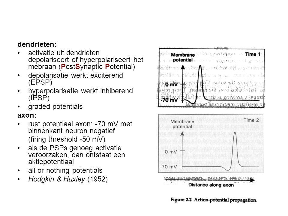 dendrieten: activatie uit dendrieten depolariseert of hyperpolariseert het mebraan (PostSynaptic Potential)