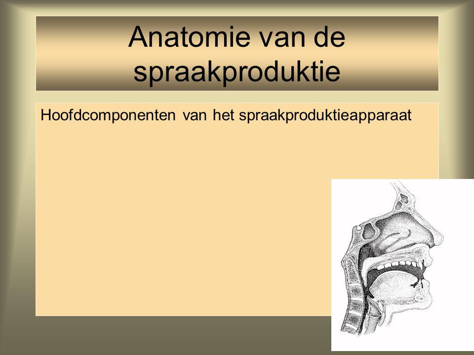 Anatomie van de spraakproduktie