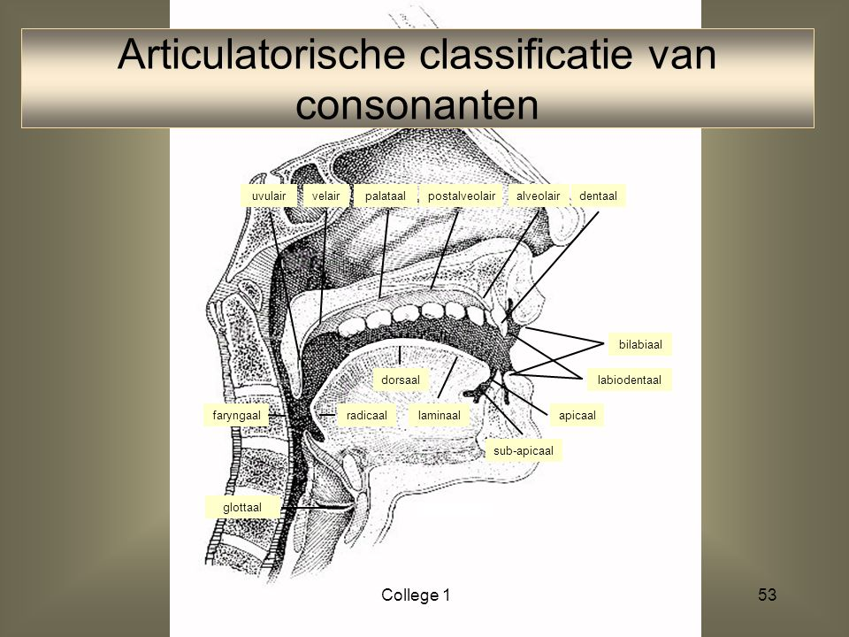 Articulatorische classificatie van consonanten