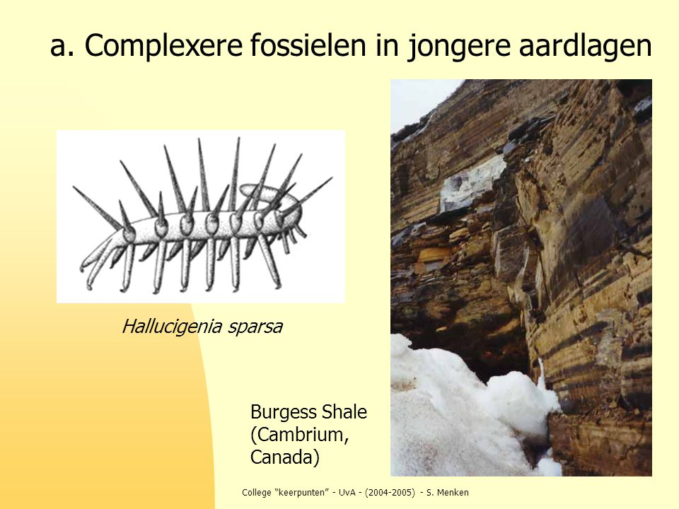 a. Complexere fossielen in jongere aardlagen