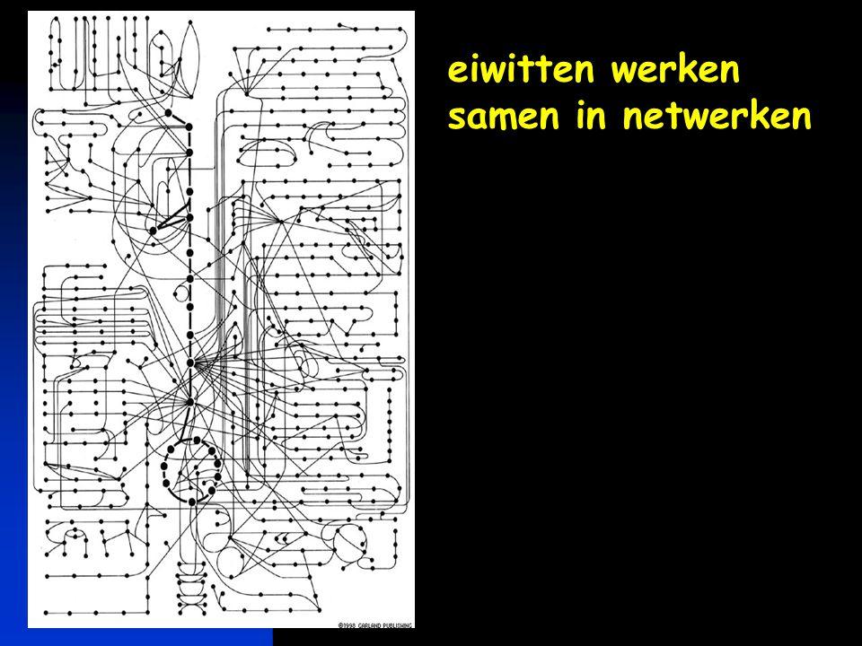 eiwitten werken samen in netwerken