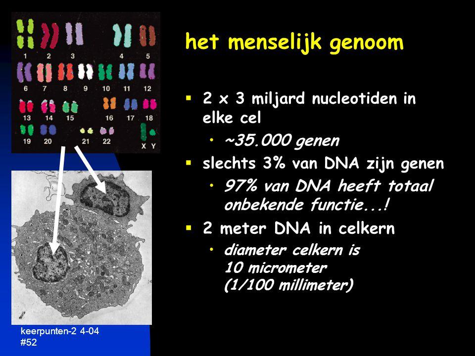 het menselijk genoom 2 meter DNA in celkern