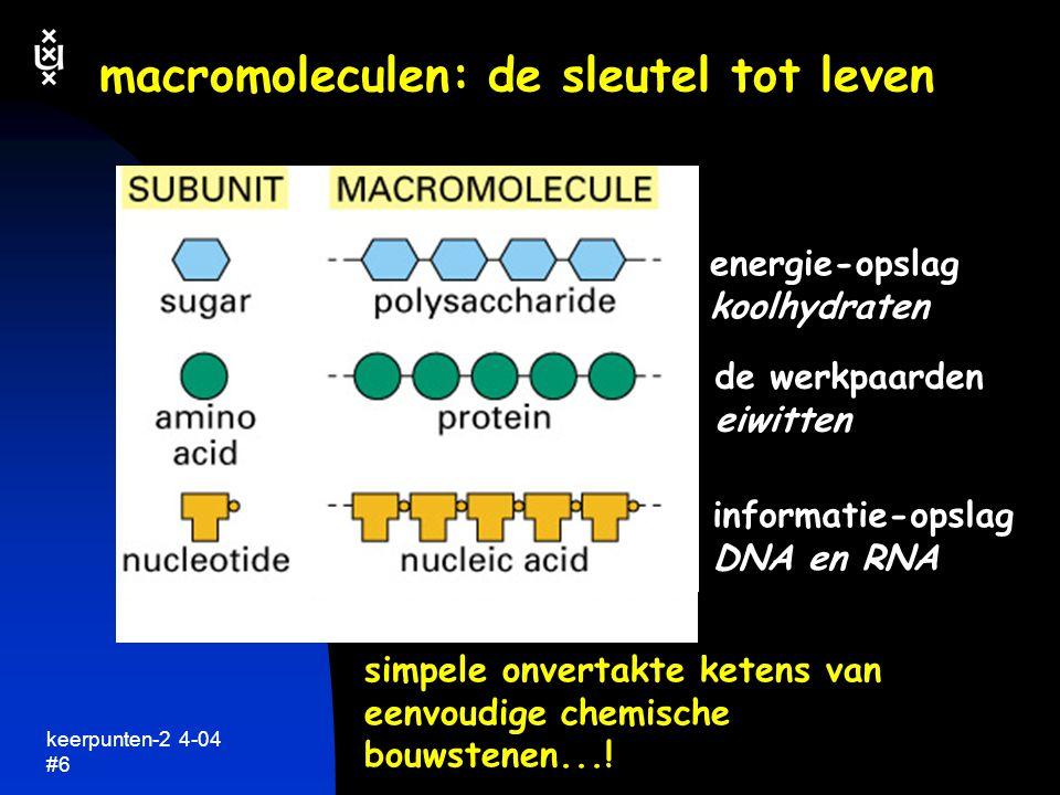 macromoleculen: de sleutel tot leven