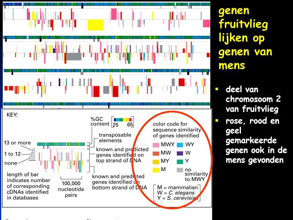 genen fruitvlieg lijken op genen van mens