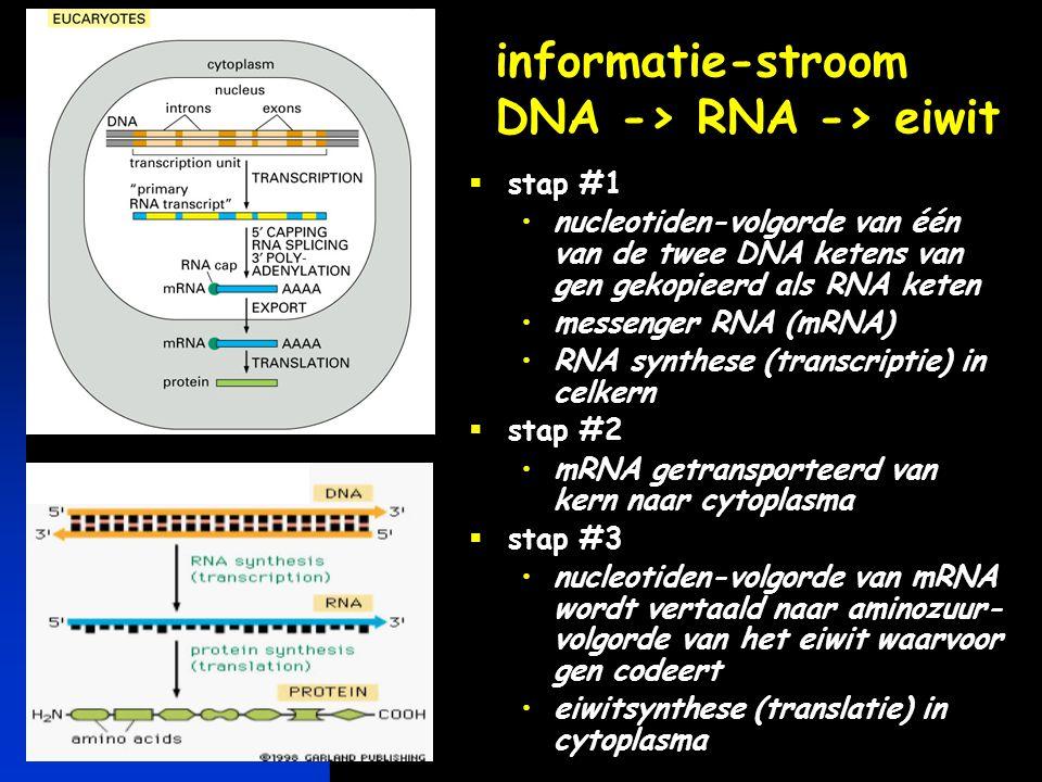 informatie-stroom DNA -> RNA -> eiwit