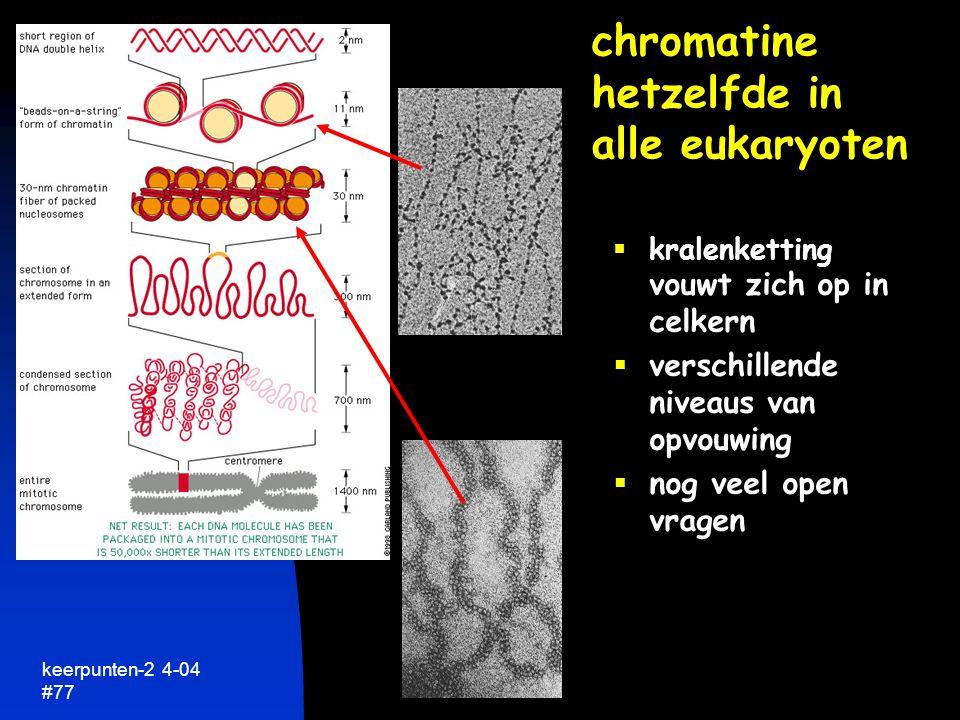 chromatine hetzelfde in alle eukaryoten