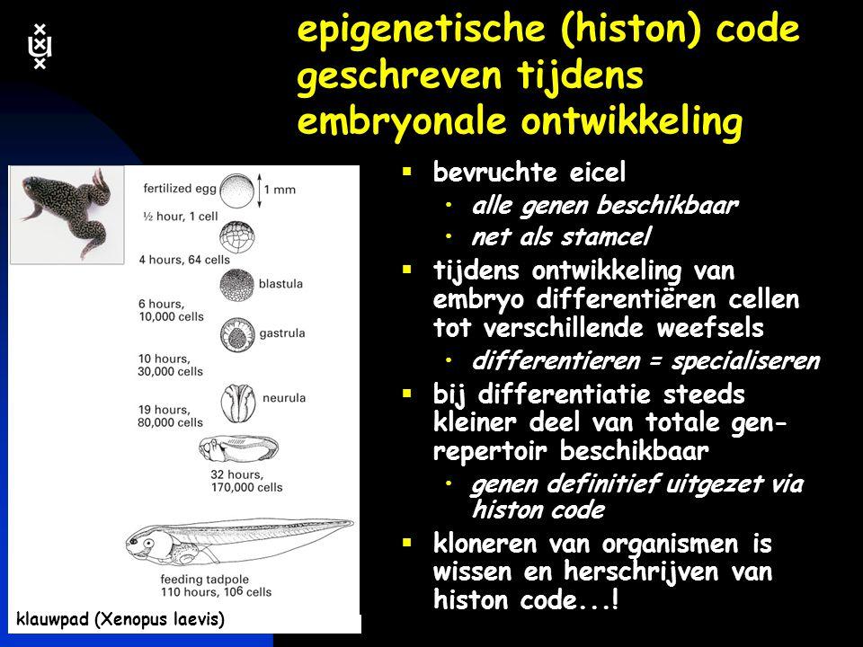 epigenetische (histon) code geschreven tijdens embryonale ontwikkeling
