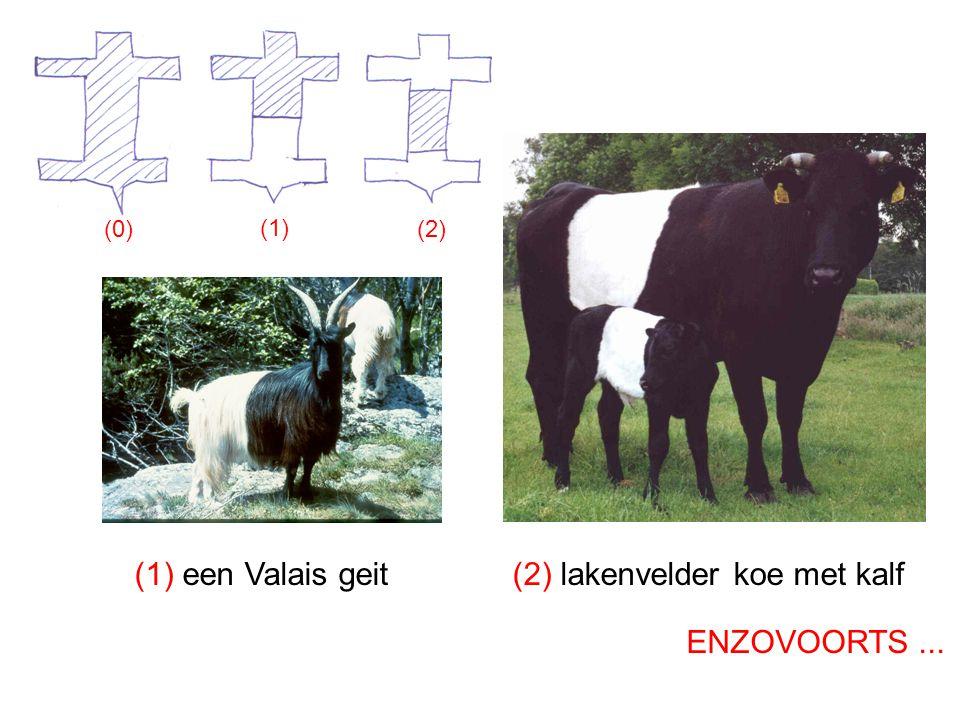 (2) lakenvelder koe met kalf