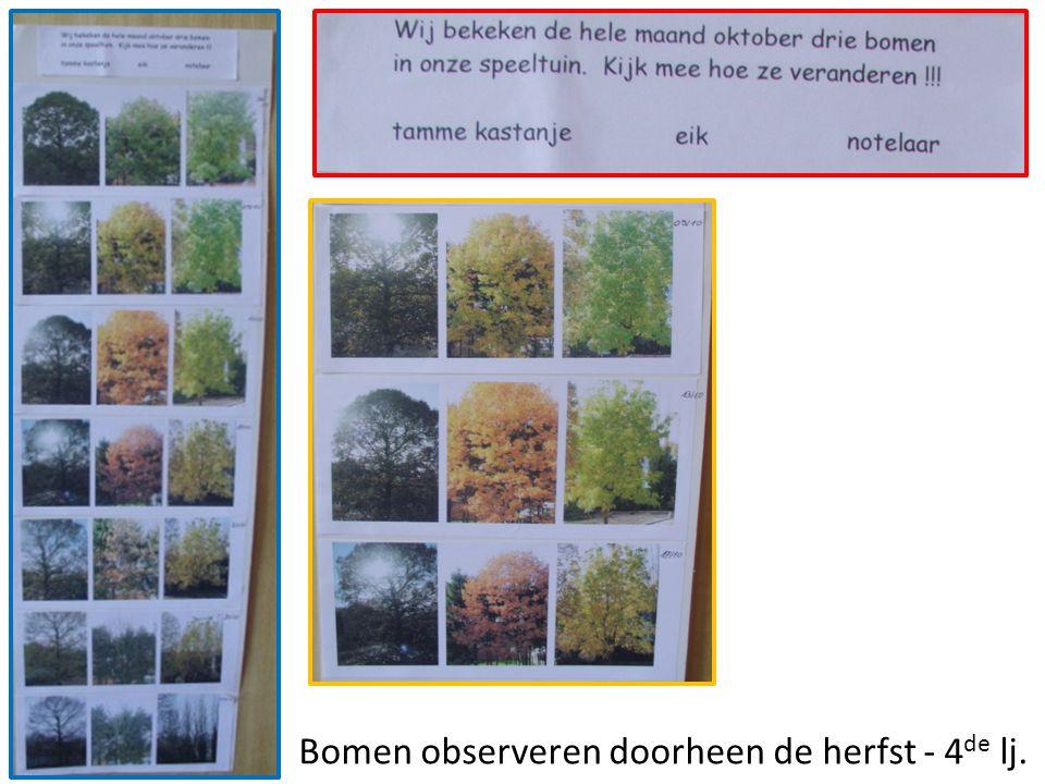 Bomen observeren doorheen de herfst - 4de lj.