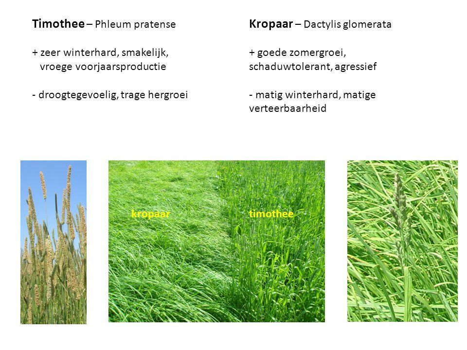 Timothee – Phleum pratense Kropaar – Dactylis glomerata