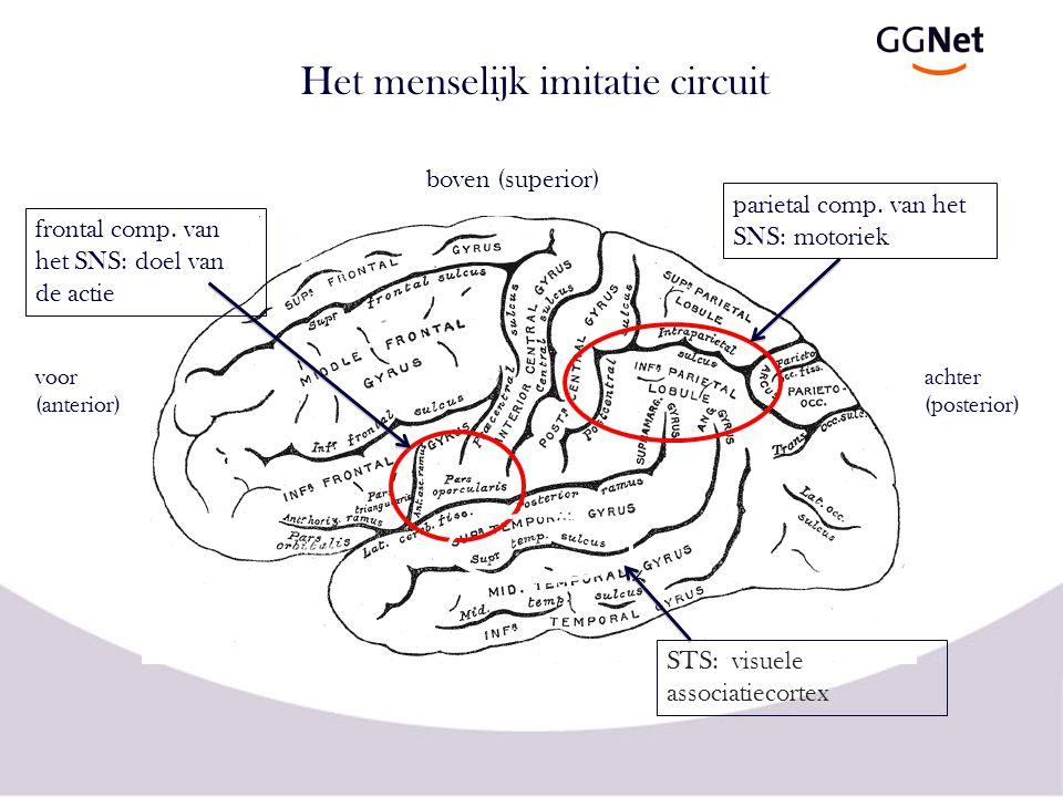 Het menselijk imitatie circuit