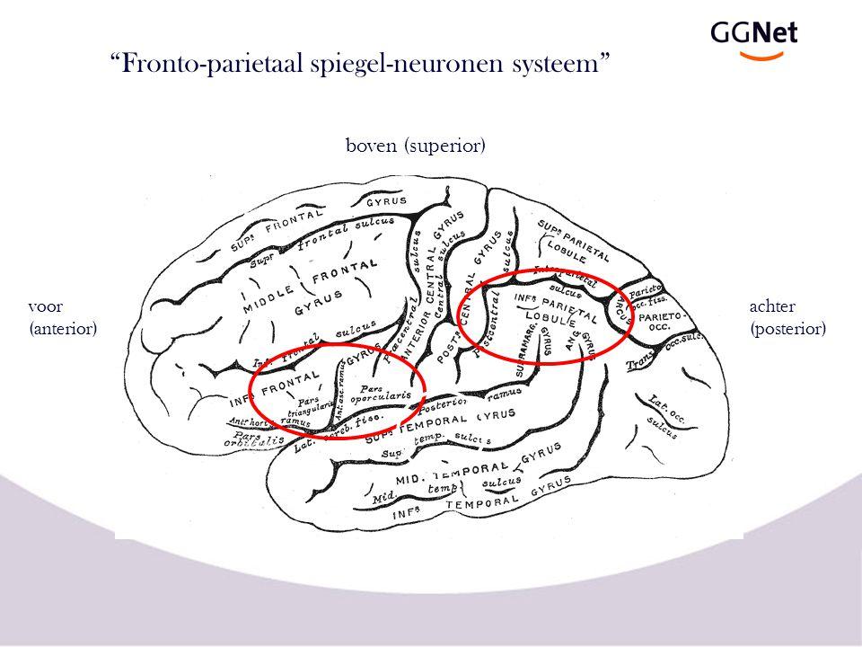 Fronto-parietaal spiegel-neuronen systeem