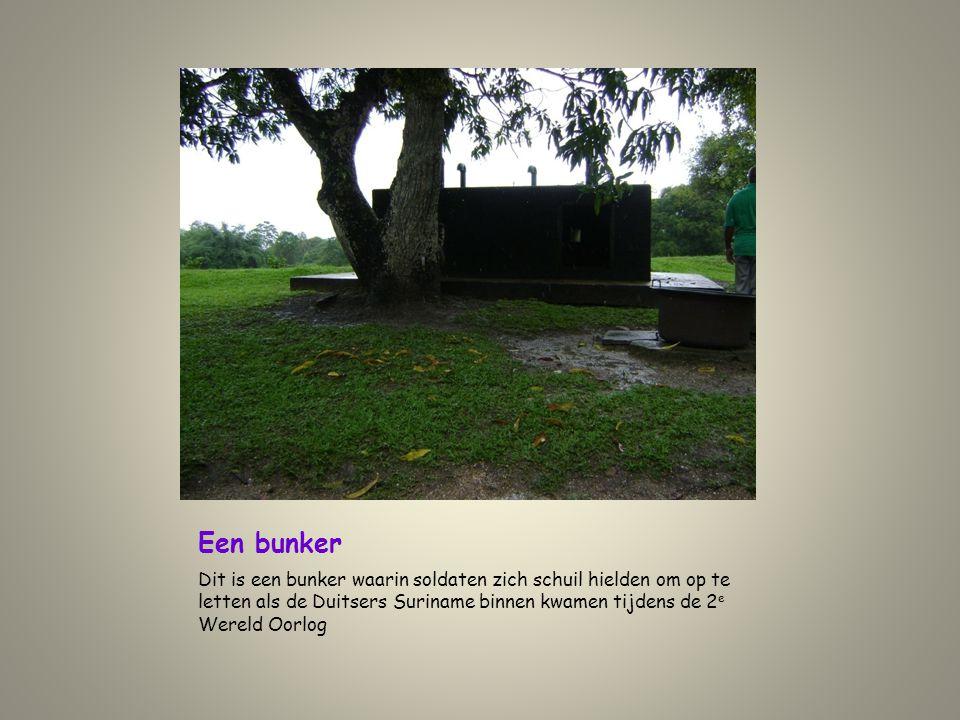 Een bunker Dit is een bunker waarin soldaten zich schuil hielden om op te letten als de Duitsers Suriname binnen kwamen tijdens de 2e Wereld Oorlog.