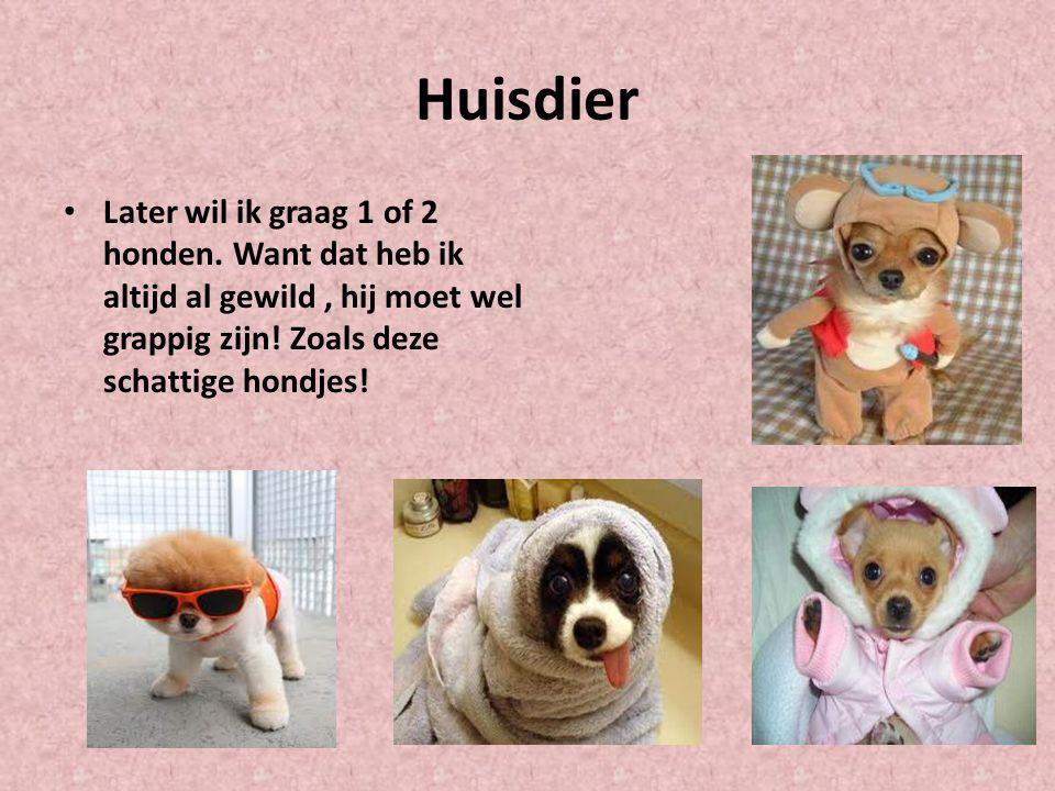 Huisdier Later wil ik graag 1 of 2 honden.
