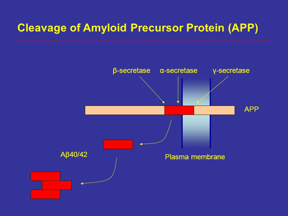 Cleavage of Amyloid Precursor Protein (APP)