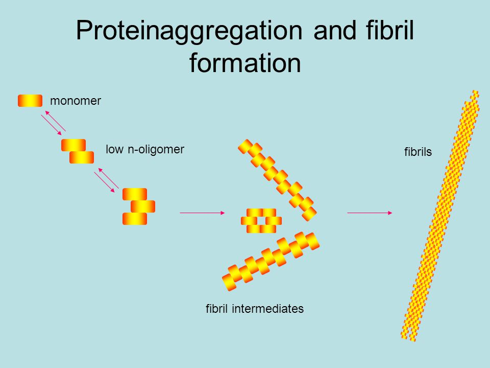 Proteinaggregation and fibril formation