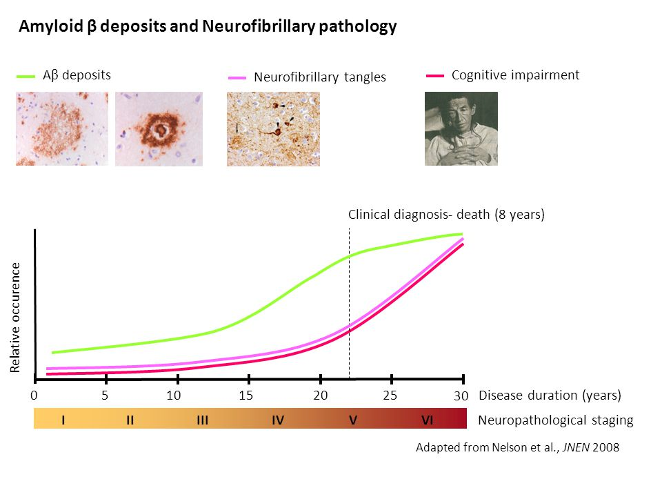 Amyloid β deposits and Neurofibrillary pathology