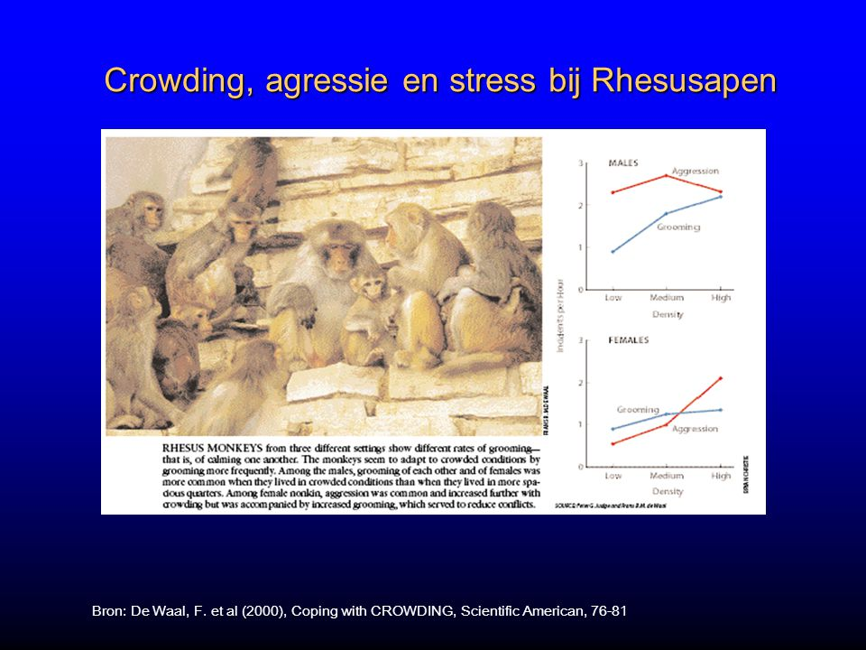 Crowding, agressie en stress bij Rhesusapen