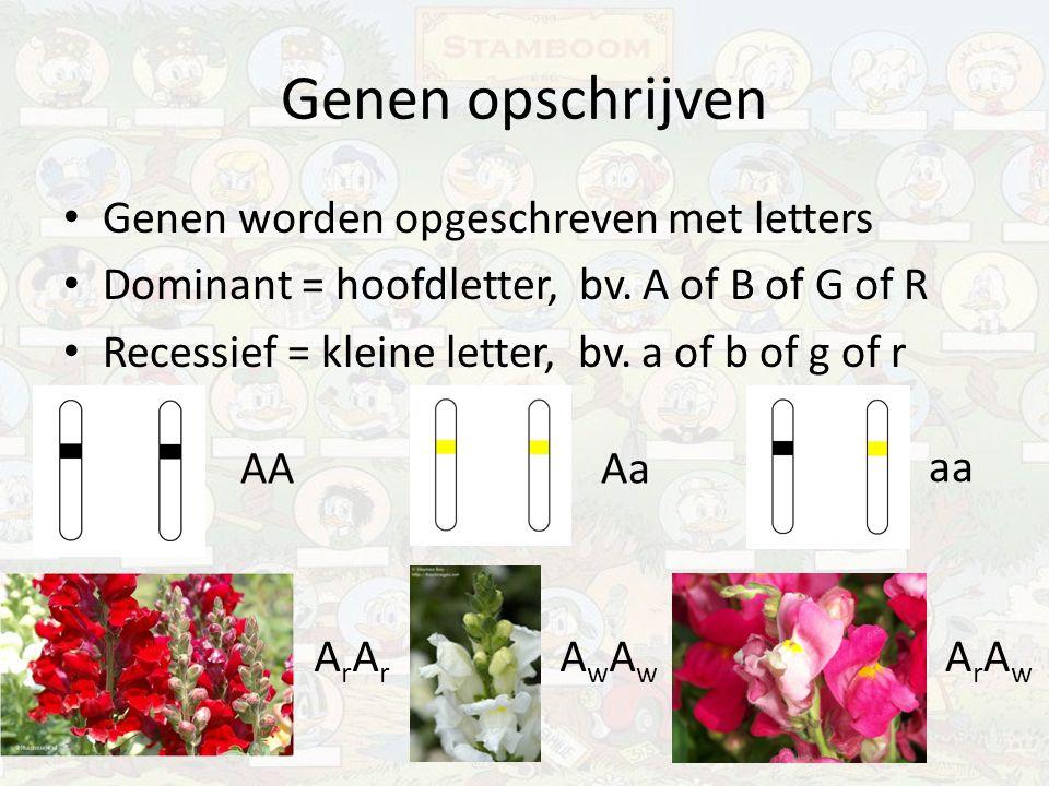 Genen opschrijven Genen worden opgeschreven met letters