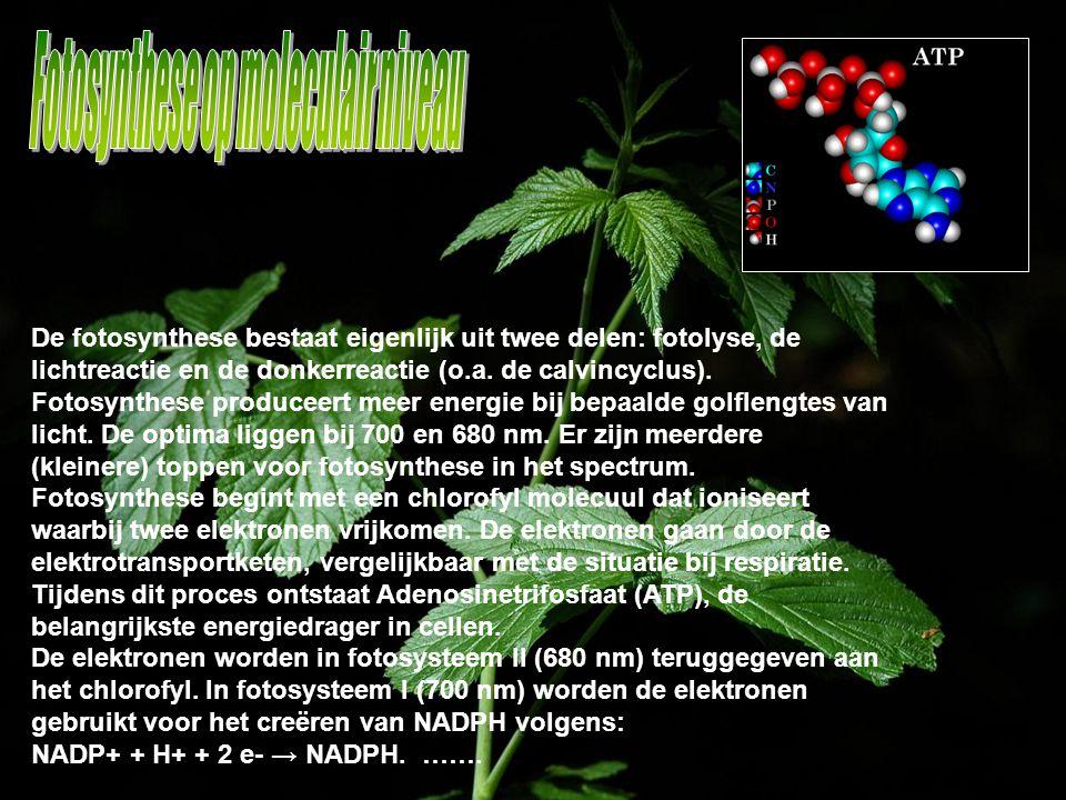 Fotosynthese op moleculair niveau
