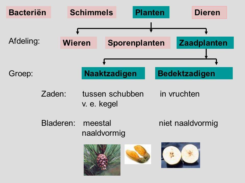 Bacteriën Schimmels. Planten. Dieren. Afdeling: Wieren. Sporenplanten. Zaadplanten. Groep: Naaktzadigen.