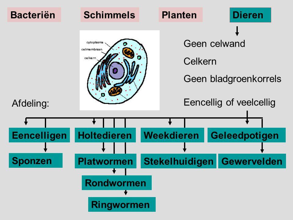 Bacteriën Schimmels. Planten. Dieren. Geen celwand. Celkern. Geen bladgroenkorrels Eencellig of veelcellig.