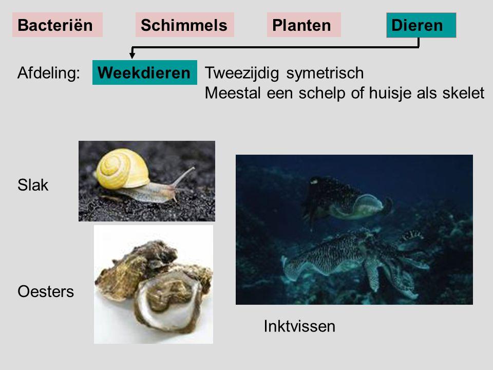 Bacteriën Schimmels. Planten. Dieren. Afdeling: Weekdieren. Tweezijdig symetrisch Meestal een schelp of huisje als skelet.