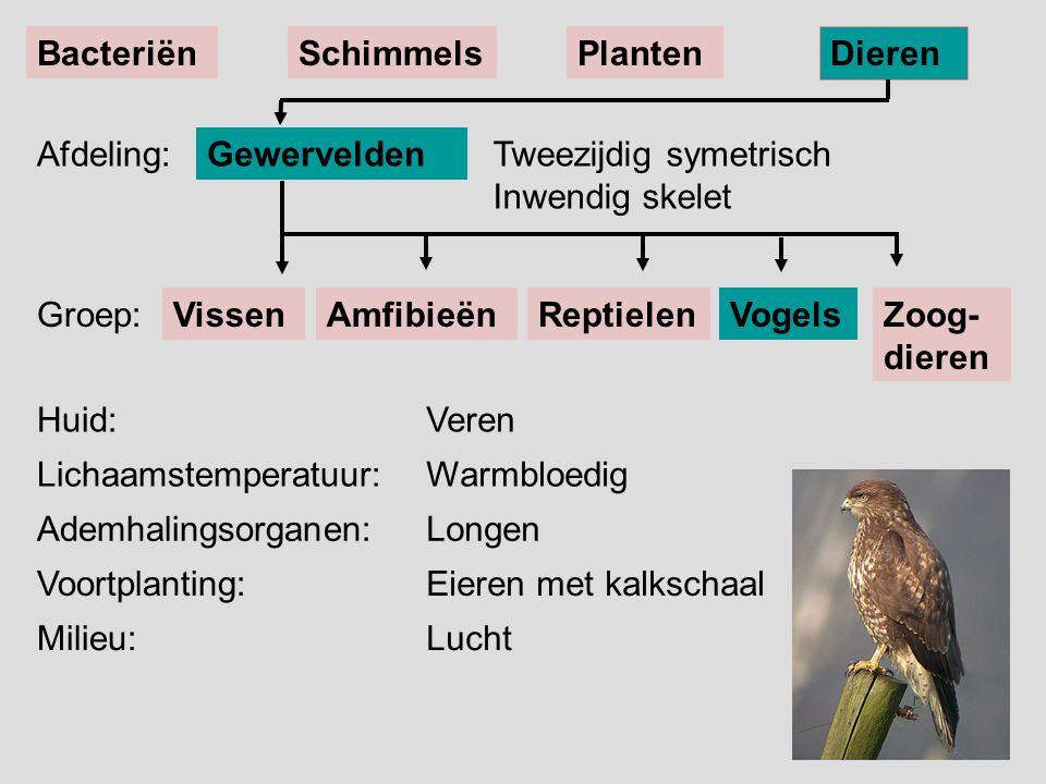 Bacteriën Schimmels. Planten. Dieren. Afdeling: Gewervelden. Tweezijdig symetrisch Inwendig skelet.